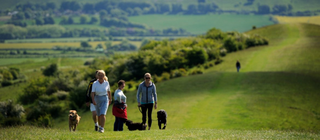 Ivinghoe Dog Walkers (National Trust)