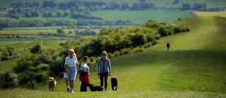 Ivinghoe Dog Walkers (National Trust)