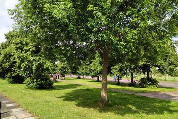 Grange trees