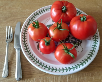 First Tomatoes 2020