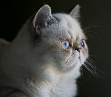 Indignant Cat (Alex Chambers, Unsplash)